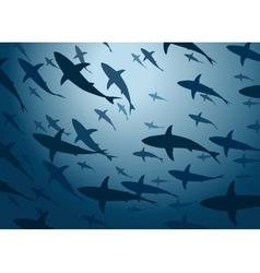 Shark school vector image vector image