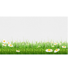 chamomile field green grass flowers and herbs vector image