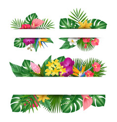 exotic flowers banner tropical leaves jungle vector image