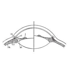 Focusing of the eye vintage vector
