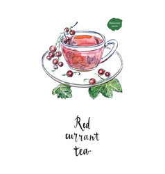 Glass cup of red currant in watercolor vector