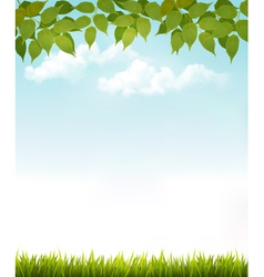 Nature background with leaves and grass vector