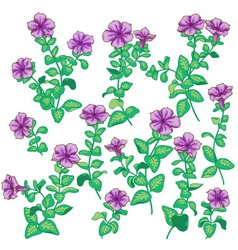 petunia set vector image