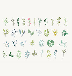 set natural and floral elements vector image