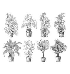 Tree sketch hand drawn architect vector