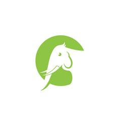 Elephant icon design vector