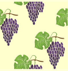 grape seamless pathless coloured pattern vector image
