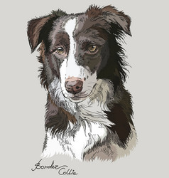 Colored border collie vector