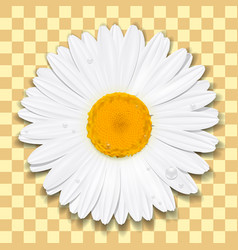 daisy flower chamomile summer concept vector image