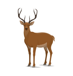 deer animal flat icon vector image