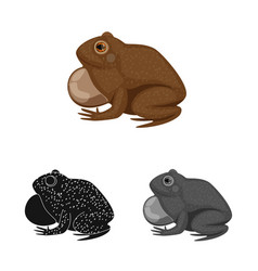 Design toad and biology icon collection vector