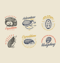 hedgehog badge set spiny forest wild animal label vector image