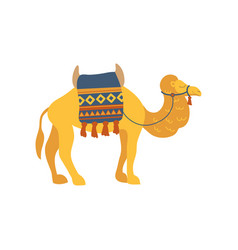 Camel whit saddle and cover on the back two vector