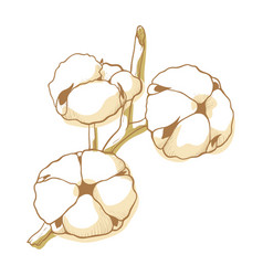 cotton flower icon natural decoration in blossom vector image