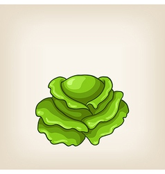 Cute green hand drawn cabbage vector image