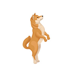 Detailed flat icon of funny shiba inu vector