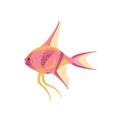 Scalar aquarium fish isolated on white graphic vector