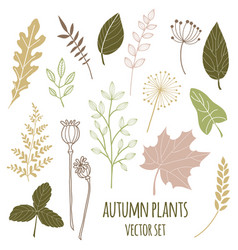 Set botany sketches and line doodles vector