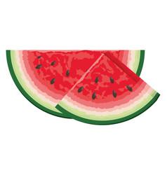 tropical fruit cartoon vector image