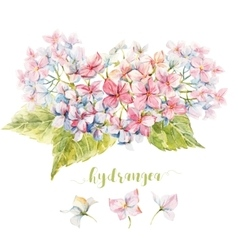 Watercolor hydrangea composition vector