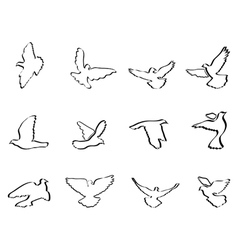 shape of pigeons and doves vector image vector image