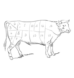 Beef parts vector