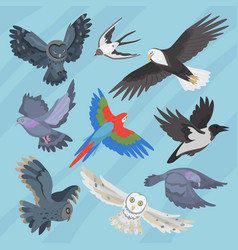 different flying birds breed species race strain vector image