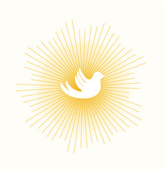 Dove in sun lights vector