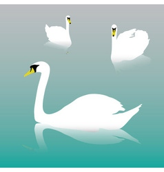 swan on the watter eps10 vector image