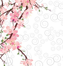 Vector sakura branch on ornate background vector