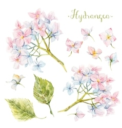 watercolor hydrangea set vector image