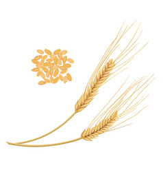 Wheat ears isolated on white background golden vector
