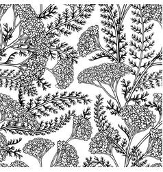 yarrow seamless pattern vector image