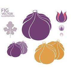 Fig Set vector image vector image