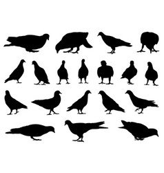 different doves vector image vector image