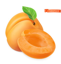 Apricot image fresh fruit 3d realistic icon vector