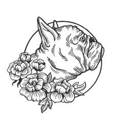 Bulldog animal engraving vector