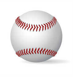Leather baseball ball vector