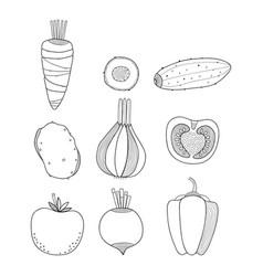 Linear vegetables carrots vector