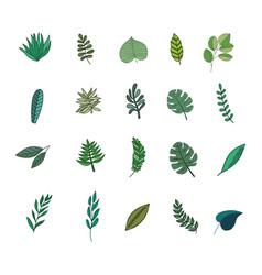 Tropic leaves set vector