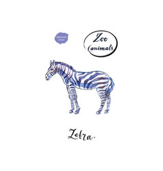 Young standing zebra in watercolor vector