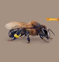 Bee 3d realistic icon vector