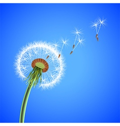 Dandelion seeds blowing away background vector