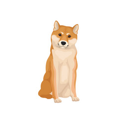 Detailed flat icon of sitting shiba inu vector