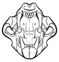 Open Jaw Skull vector