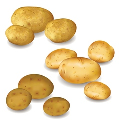 Set of vegetable potato isolated vector image
