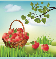 Basket with apples landscape lawn apple tree vector