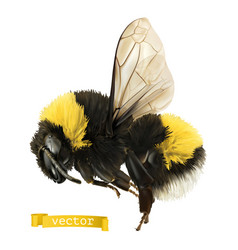 bumblebee 3d realistic icon vector image