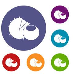 hazelnuts icons set vector image