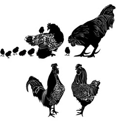 silhouettes of birds hen with chickens vector image